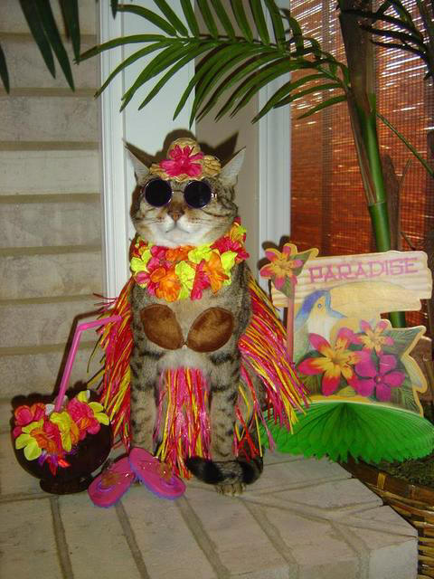 event meow luau free adult cats
