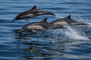ScienceatSea_dolphins Noisy Ocean Times Publishing Group tpgonlinedaily.com