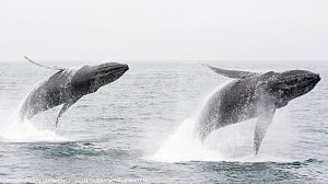 ScienceatSea_whales Noisy Ocean Times Publishing Group tpgonlinedaily.com
