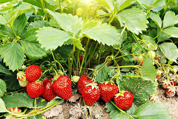 Master Gardener Times Publishing Group Inc tpgonlinedaily.com