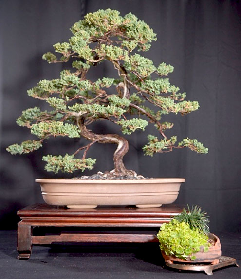 Bonsai Kai Times Publishing Group Inc tpgonlinedaily.com