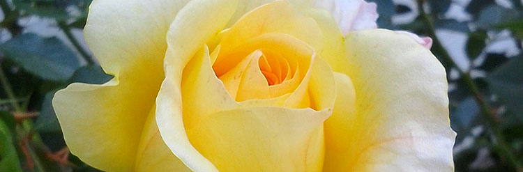 Roses Times Publishing Group Inc tpgonlinedaily.com