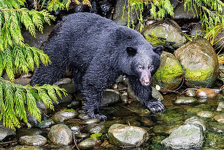 Black Bears Times Publishing Group Inc tpgonlinedaily.com